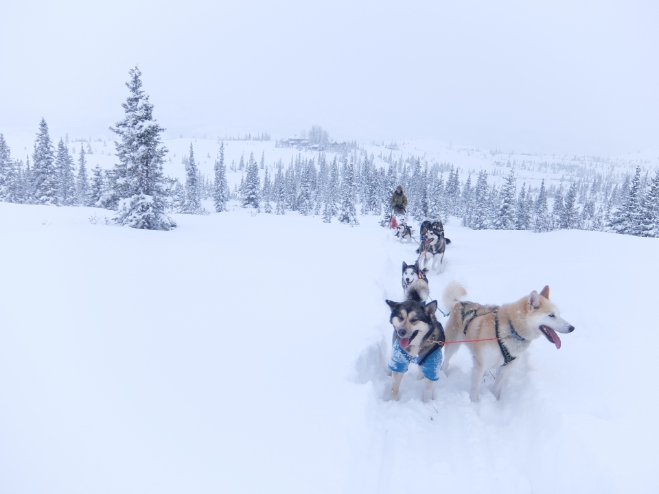 A team of dogs pull a dogsled through thickly blanketed snow, with snowy pine trees dotting the landscape