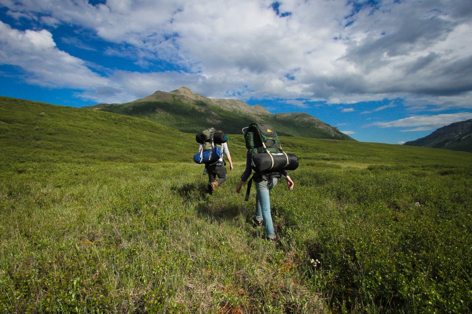 Two backpackers hiking in an alpine meadow at Denali National Park & Preserve