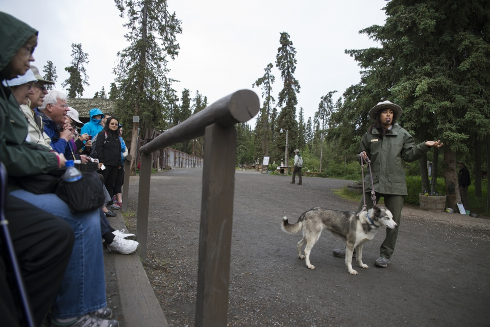 A sled dog demo with a ranger holding a sled dog on a leash in front of an audience at Denali National Park & Preserve