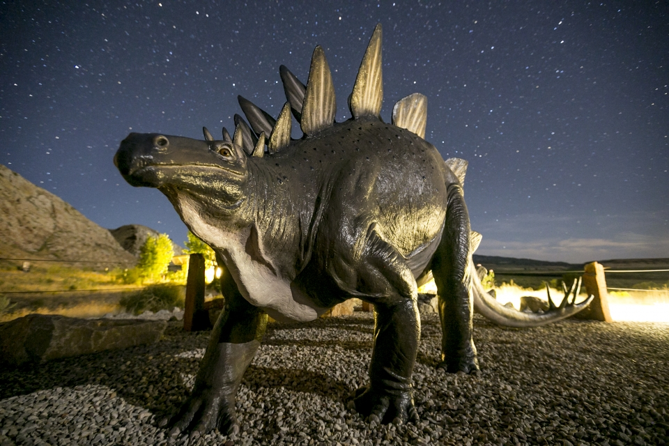 Stegosaurus statue under a starry sky