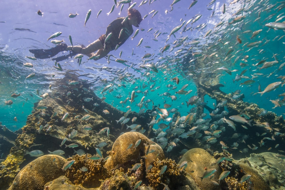 A snorkeling visitor exploring the fish life in Dry Tortugas National Park