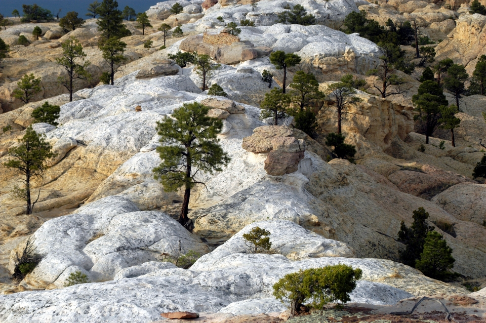 The Headland Trail follows the natural surface of the sandstone bluff, dotted with trees, at El Morro National Monument.