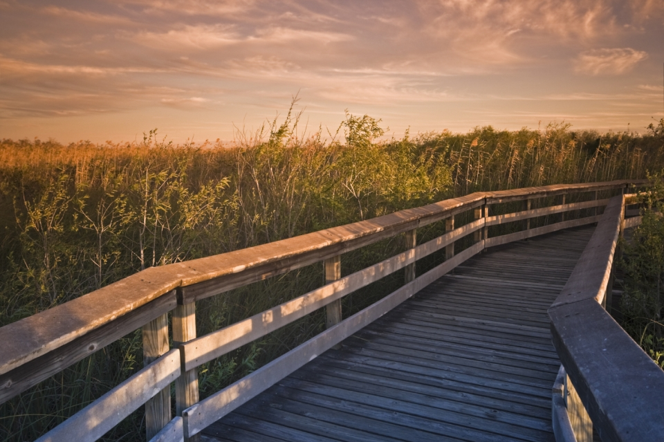 Everglades National Park boardwalk