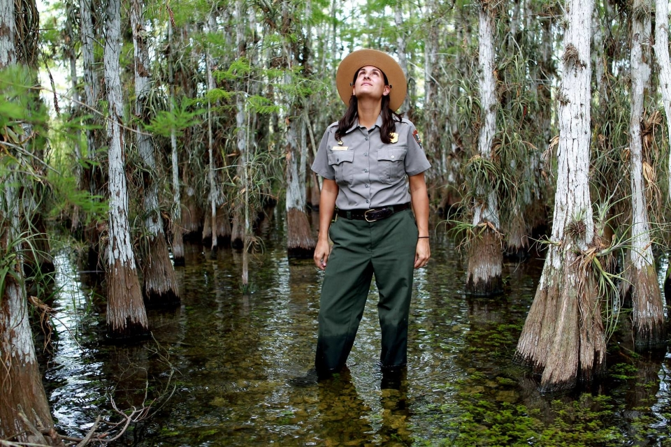 NPS ranger stands in Cypress Dome at Everglades National Park