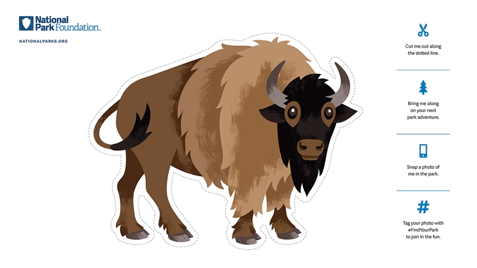 Colored flat bison cutout