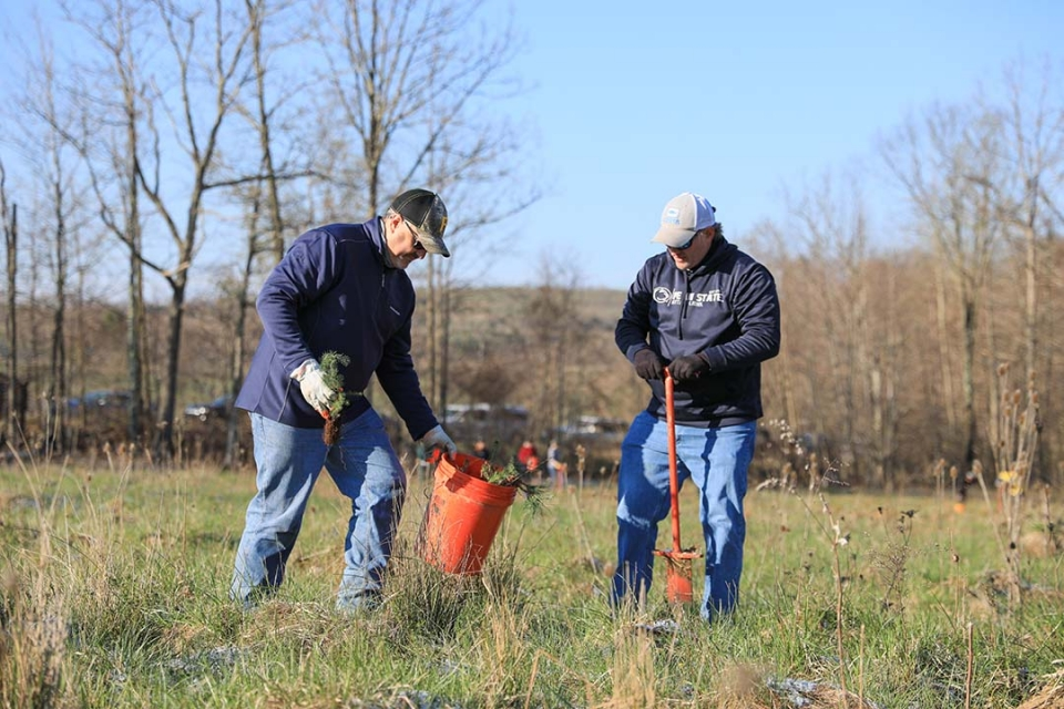 Two volunteers dig a hole in a grassy meadow, in which they will plant a tree