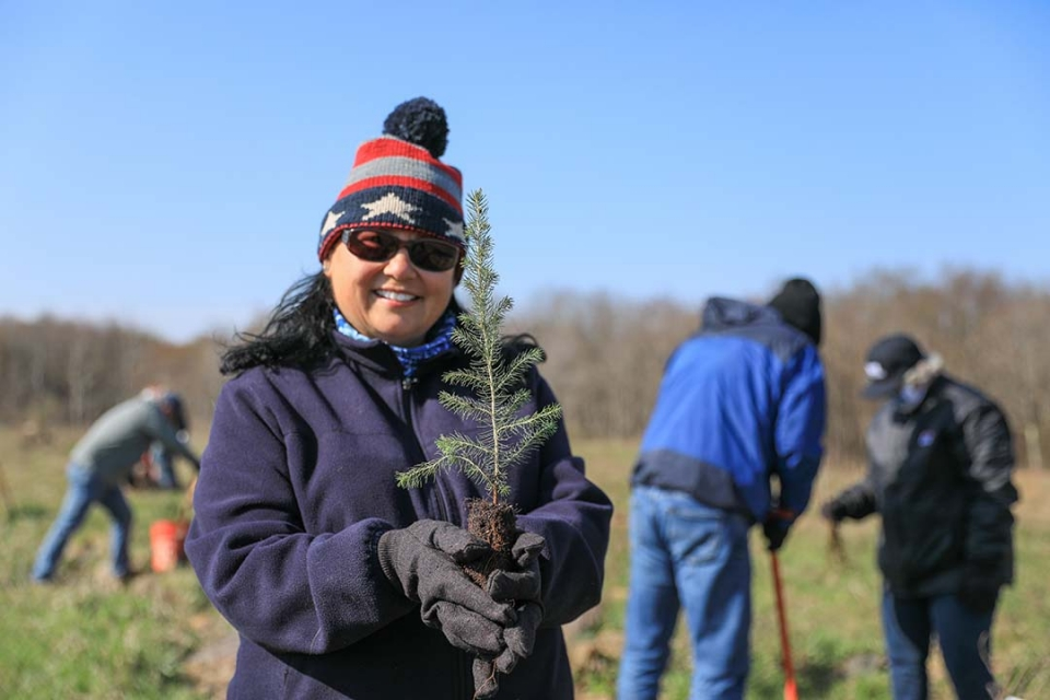 A volunteer holds a baby tree, ready for planting, while other volunteers dig holes for the planting