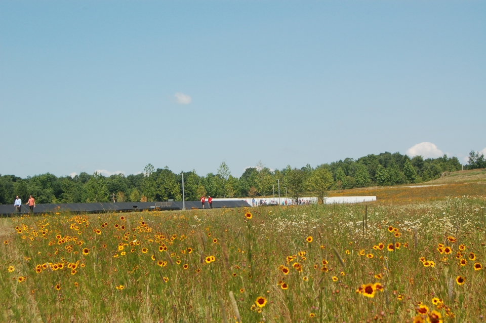 A meadow filled with bright yellow wildflowers slopes down toward the edge of the Memorial Plaza at the crash site of Flight 93 National Memorial
