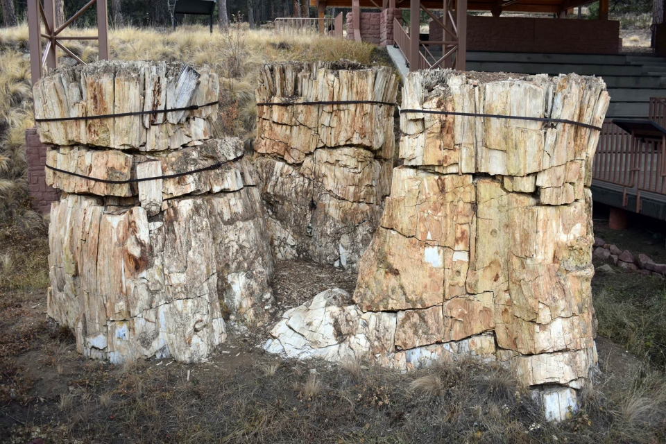 Rare petrified redwood stump trio seen near the visitor center a Florissant Fossil Beds National Monument