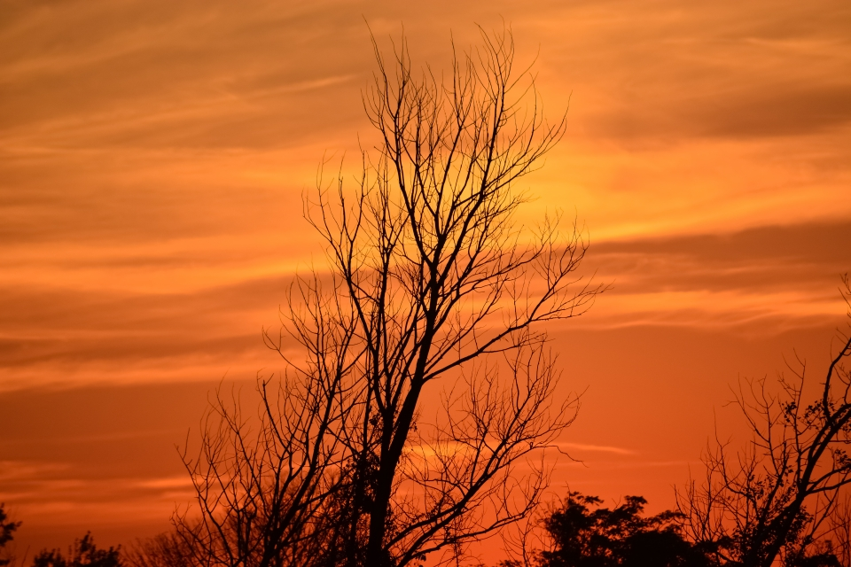 Tree branches reaching into an orange sky at Gateway National Recreation Area