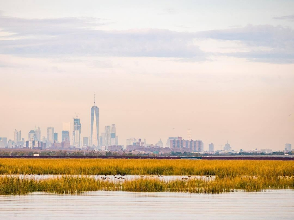 Marsh with birds and New York City skyline in background
