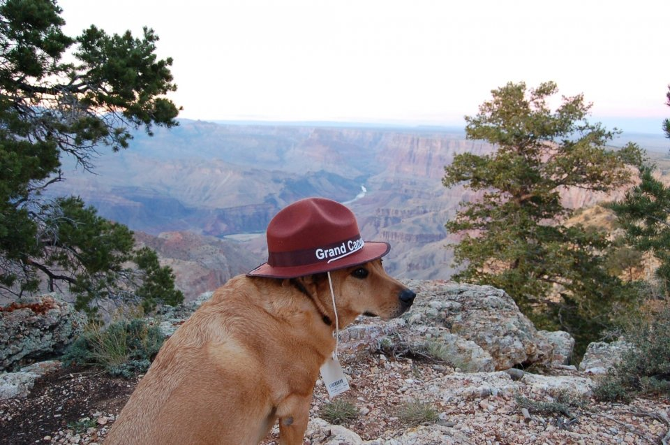 Dog wearing a Grand Canyon ranger hat sitting at the rim at Grand Canyon National Park