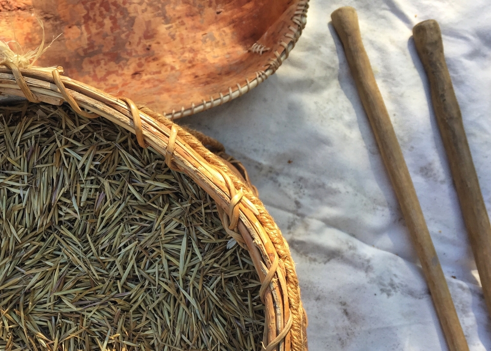 Raw wild rice in a basket at Grand Portage National Monument