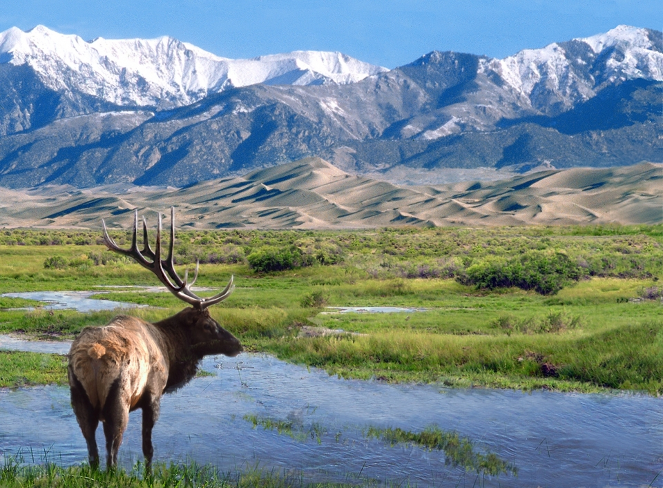 A solitary elk looks into the distance at the edge of a creek. In the background, a snow-tipped range of mountains