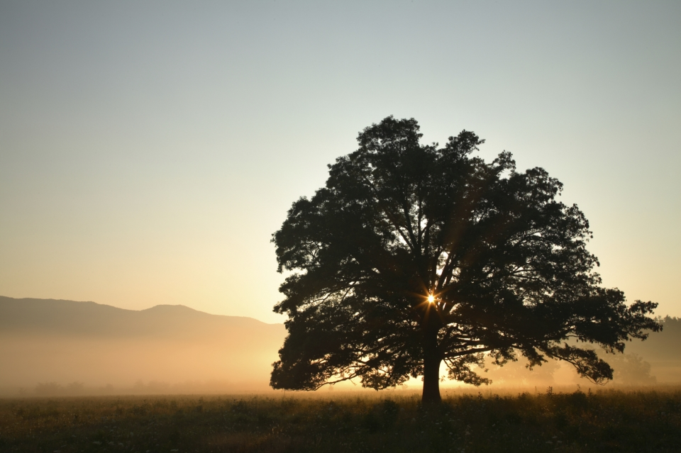Tree at sunset at Great Smoky Mountain National Park
