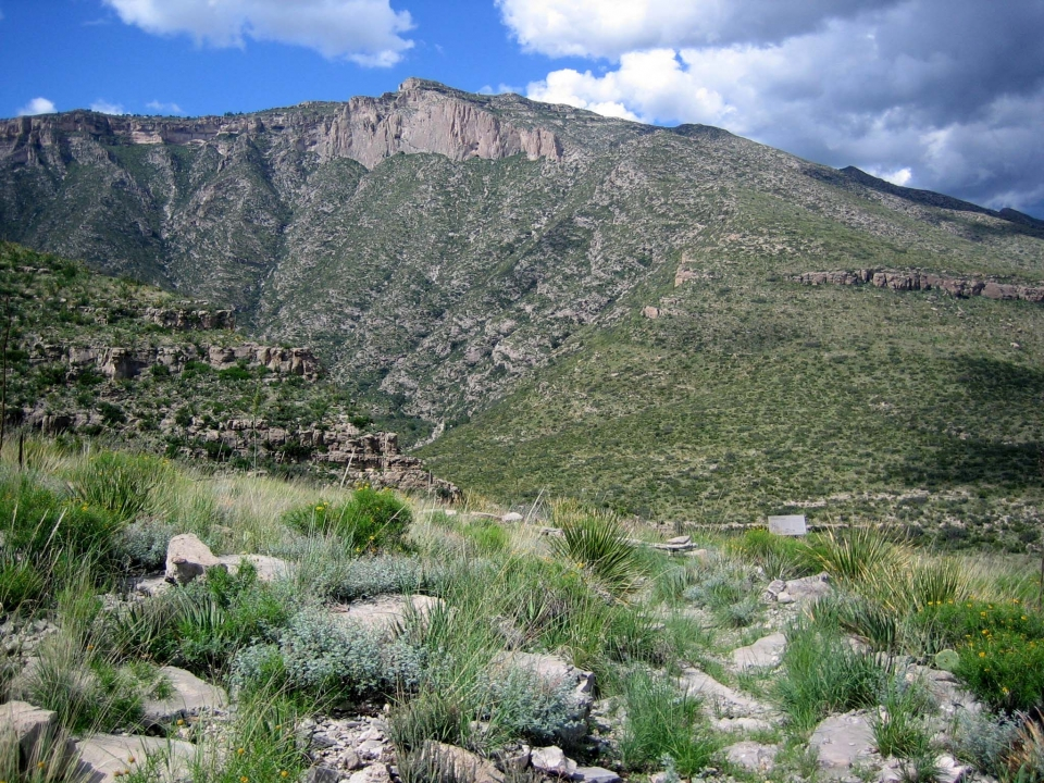 Desert scenery along the McKittrick Canyon Nature Loop at Guadalupe Mountains National Park in Texas