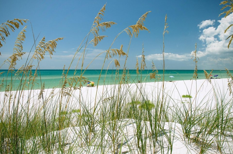 Close-up of tall grass growing on the edge of the white sandy beach of Gulf Islands National Seashore