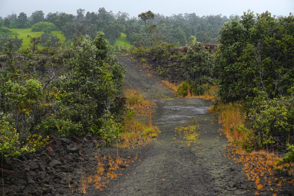 Wide, rocky trail through sparse forest in a lava field under overcast skies