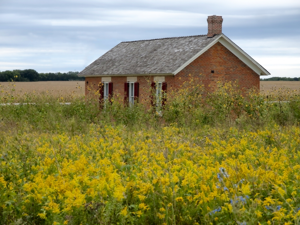 A one room red brick schoolhouse in a meadow of yellow wildflowers
