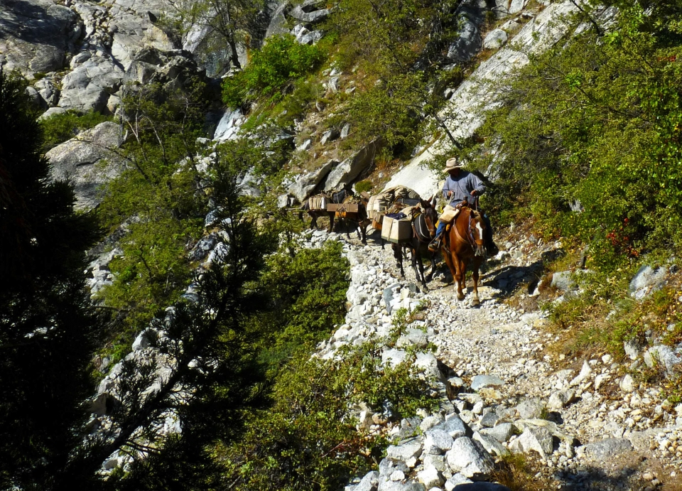 On the High Sierra Trail at Sequoia National Park, a horseback rider carefully travels down a rocky trail followed by his pack