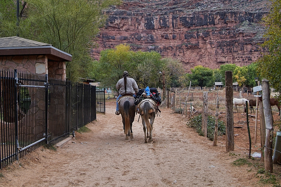 Supai Village located within the Havasupai Indian Reservation