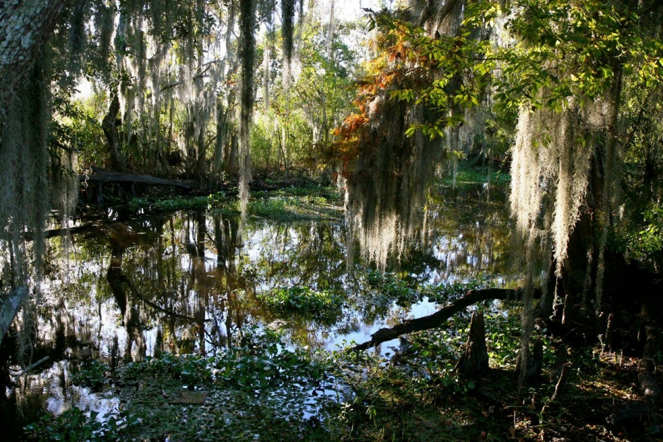 Sunset shining over the swamps, back-lighting the Spanish moss on the trees of the Lower Kenta Canal in the Barataria Preserve of Jean Lafitte National Historical Park and Preserve