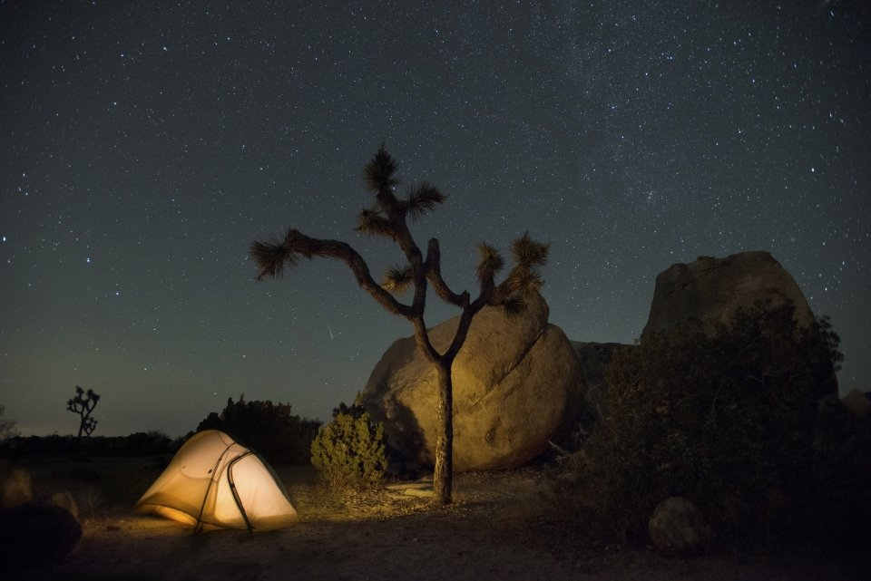A starry sky frames a night view of Joshua trees and a campground tent at Joshua Tree National Park