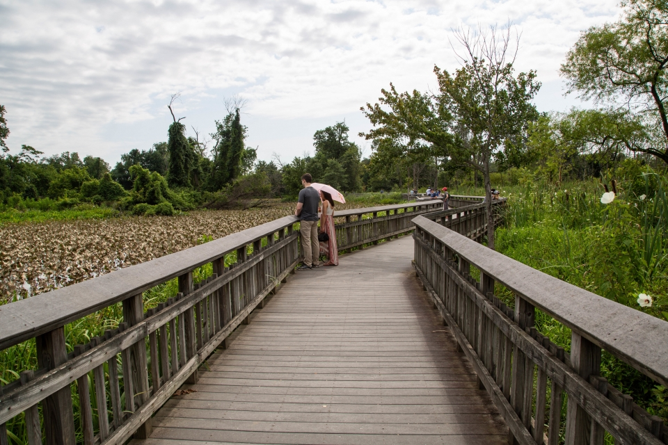 Visitors walking on a boardwalk through a marsh with flowers in bloom