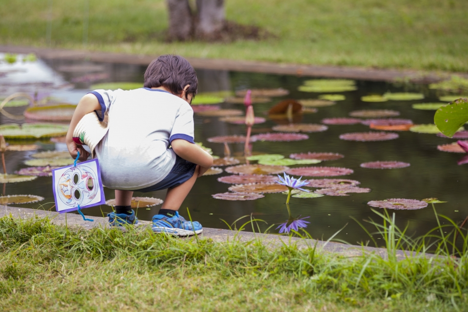 A young boy looks at a small pool with lilies and lily pads