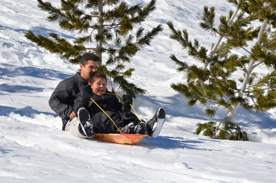 A man and a young boy riding down a snowing hill past trees in an orange and yellow sled.