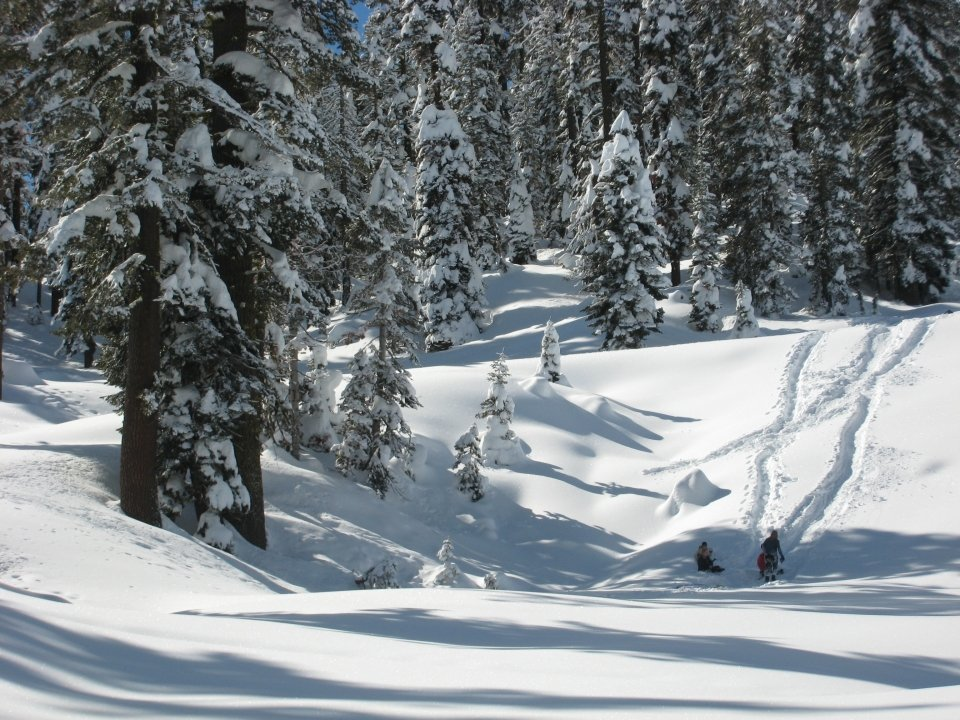 In the distance, a family sleds down a hill heavily draped in snow. All around them, tall evergreen trees are weighed down with snow