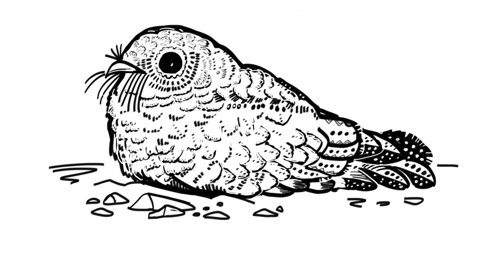 A coloring book page, uncolored, depicting a common poorwill bird - small and squat with textured feathers