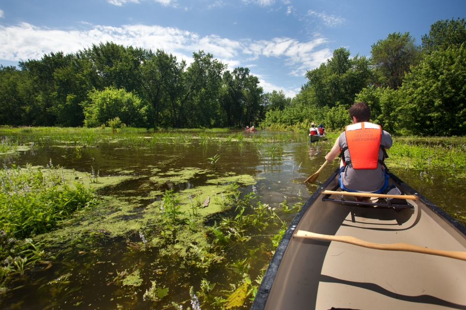 Canoers paddling on the Floodplain River, a wooded swamp on the Mississippi National River and Recreation Area