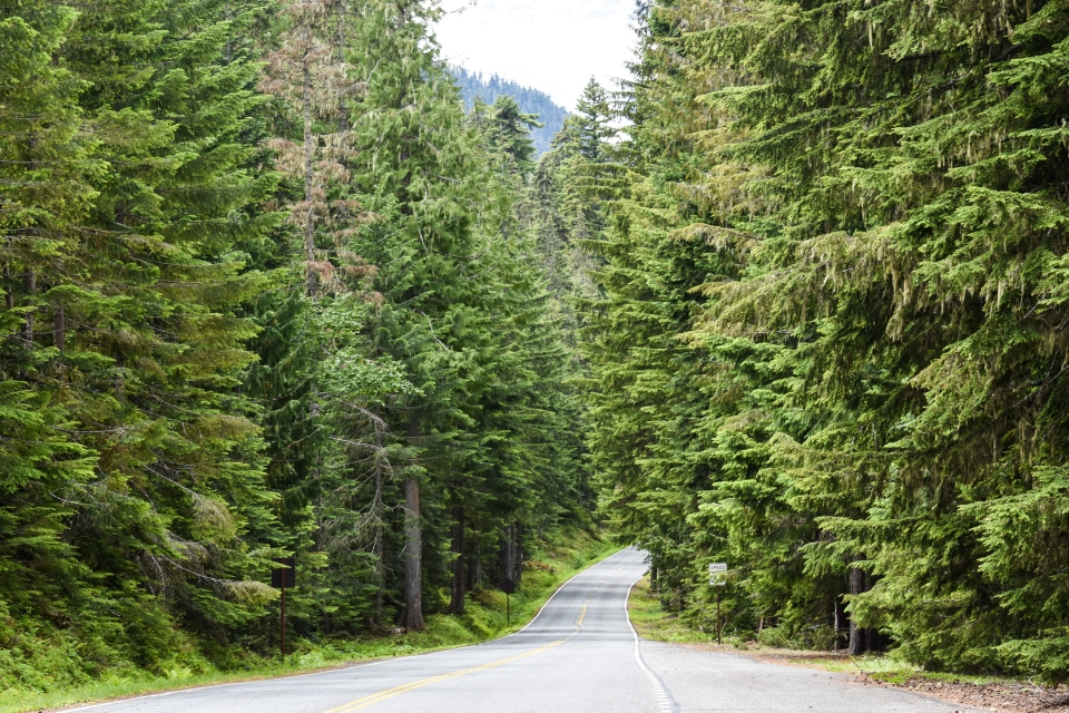 A road curves between tall green trees on either side.