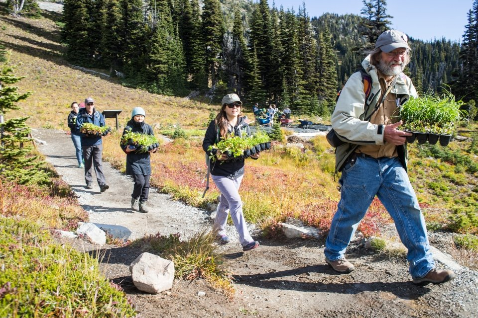 Volunteers carry flats of plants up a trail on a sunny day