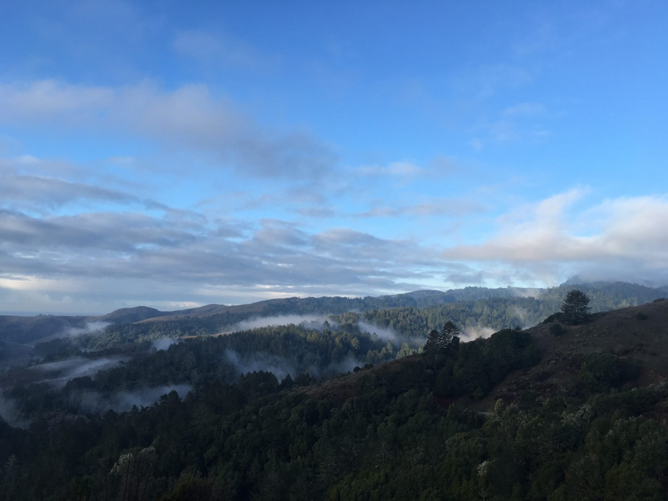 A view from the top of Fern Creek Trail at Muir Woods National Monument