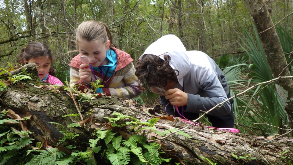 Three students with small magnifying glasses lean over tree bark to inspect