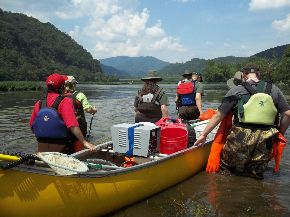 A group of volunteers in waders and with long rubber gloves knee-deep in the New River Gorge National River volunteering with the Long Term Ecological Monitoring System