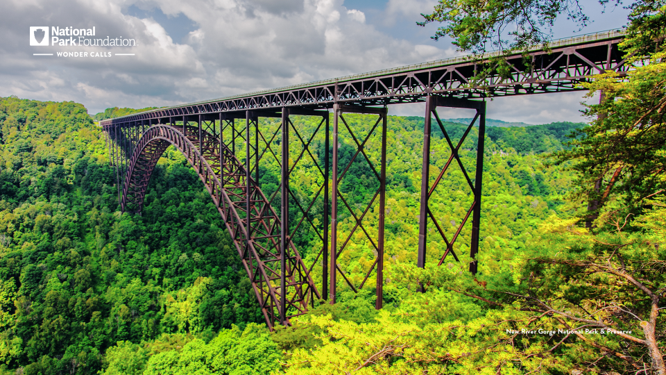 A steel bridge stretches into the distance, below valleys of bright green trees cascade downward