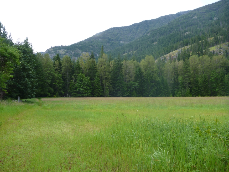 A green clearing with a ridge of evergreen pine in the background