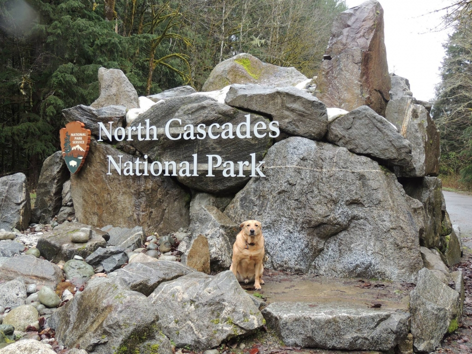 A dog sitting in front of the North Cascades National Park entrance sign