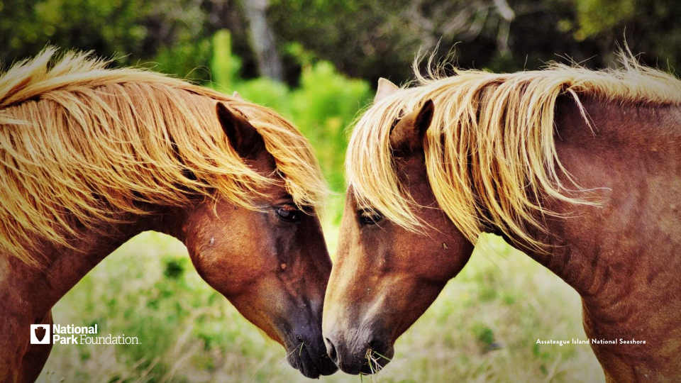 Two horses face each other, their noses nuzzling against each others