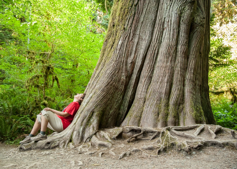 NPF staff Carolyn sits beneath a towering tree at Olympic National Park