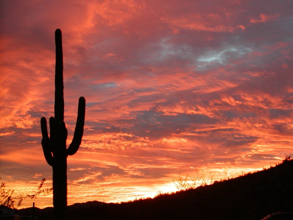 bright orange and pink sunset behind a lone sugaro cactus at Organ Pipe National Monument