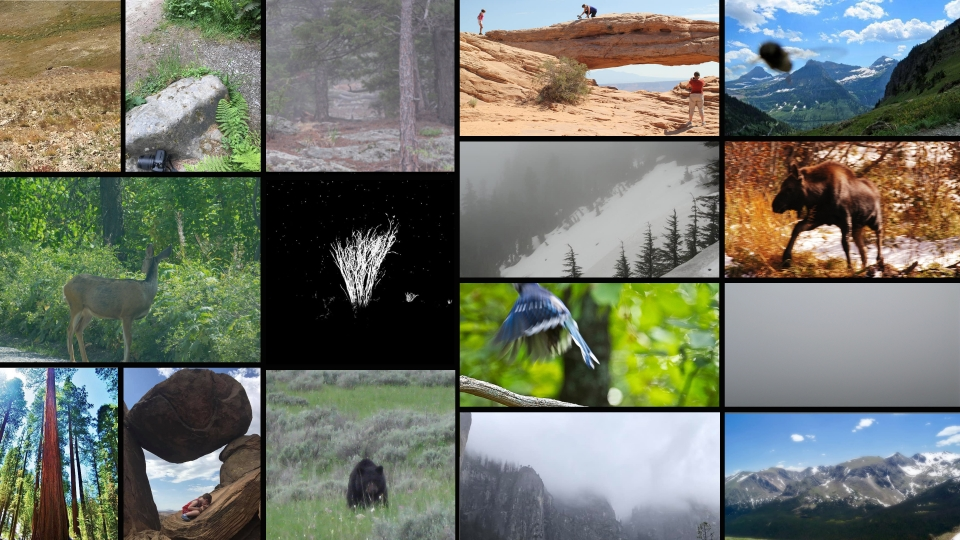 Collage of images of blurry or funny pictures taken in parks submitted by social media followers of the National Park Foundation