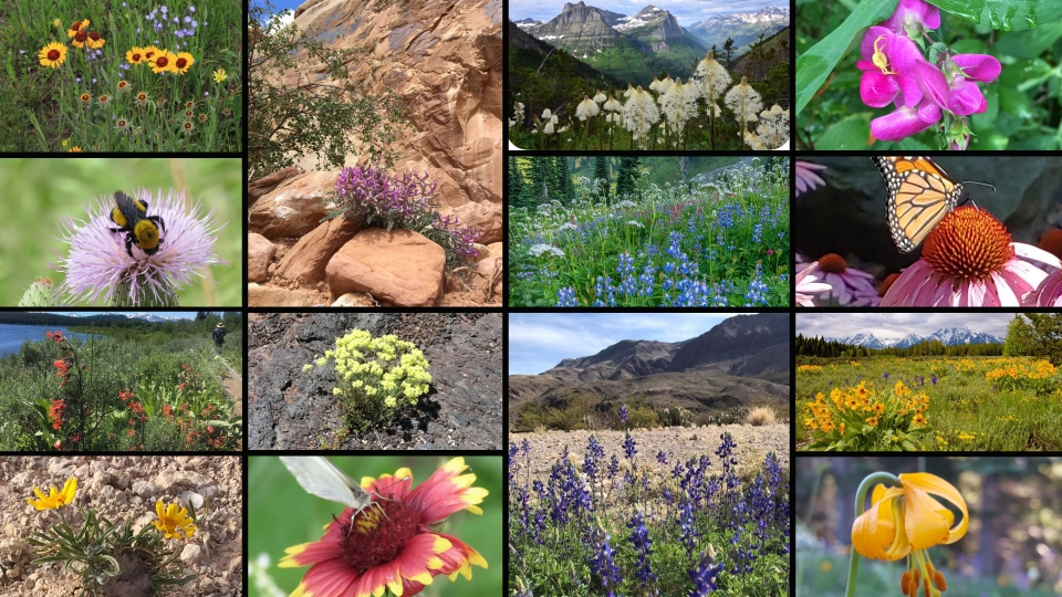 Collage of images of flowers found in parks submitted by social media followers of the National Park Foundation