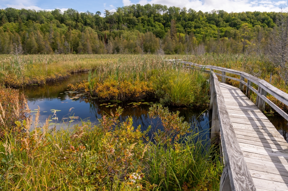 Boardwalk trail passing over the water and through the wetland