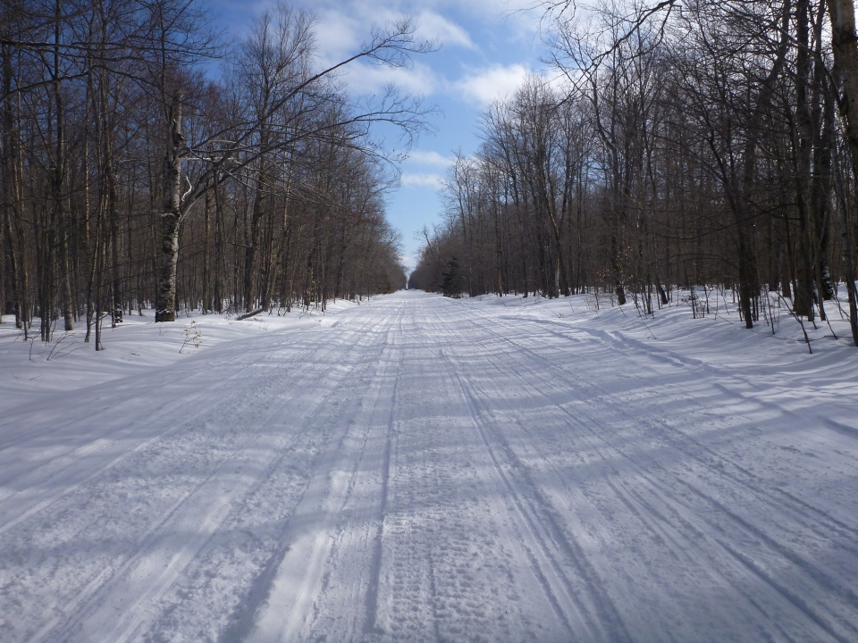 Snow-covered road through the woods