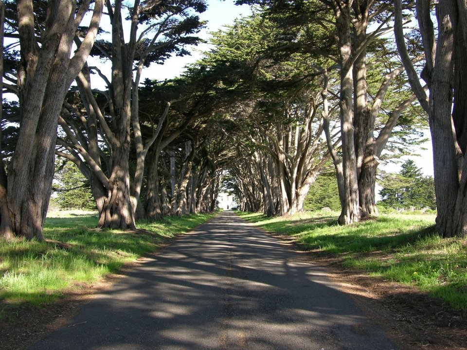 Cypress trees line both sides of a driveway that leads to a square-shaped white building at the end of the driveway