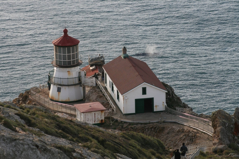 A gray whale spouting in the ocean behind the lighthouse at Point Reyes National Seashore